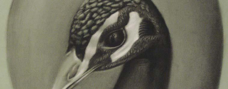 8 Nimfes i un Pavu. Exposición de dibujos de David Casallachs en La Garriga
